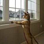 barking1