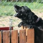 barking3