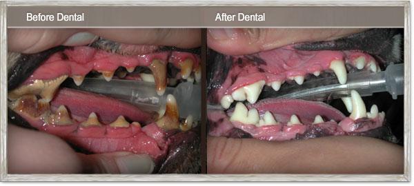 Before & After Dental