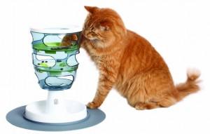 cat feeding enrichment