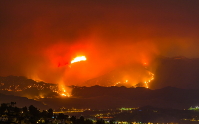 image for California Wildfires and Your Pet